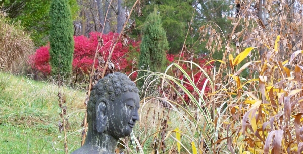 Buddha with River Oats and Burning Bush